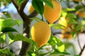 Сердце и лимон