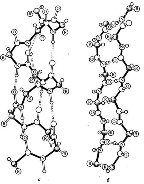 Найден белок, контролирующий возникновение навязчивых состояний