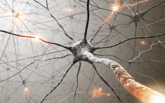Ученые назвали пять вредных привычек, убивающих клетки мозга