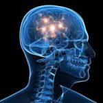 Мозг человека начинает стареть после 24 лет