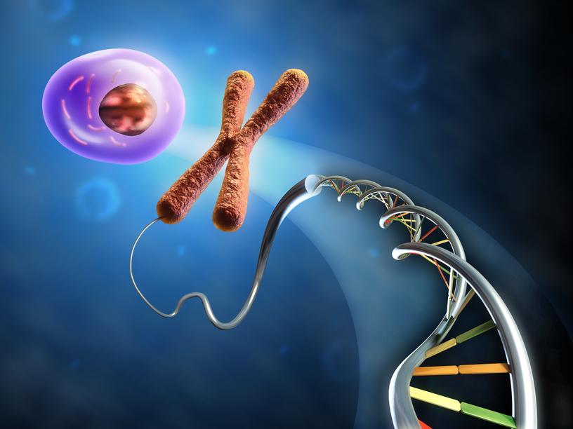 Стволовые клетки могут восстановить мозг