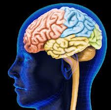 Мозжечок и признаки его поражения