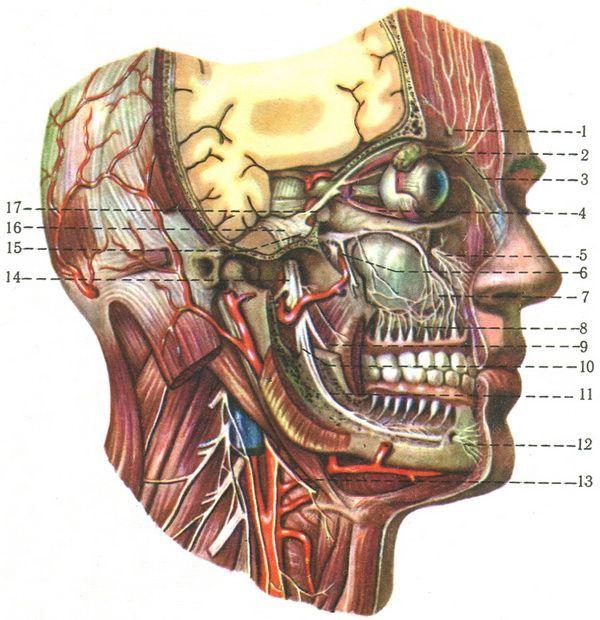 Поражение III пары черепных нервов