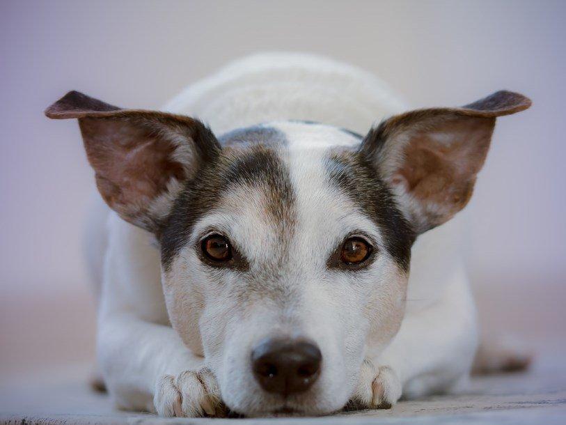 Мозг собаки реагирует на счастливое выражение лица человека
