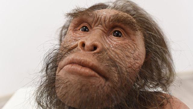 Антропологи выяснили, как выглядел мозг «первочеловека» из ЮАР