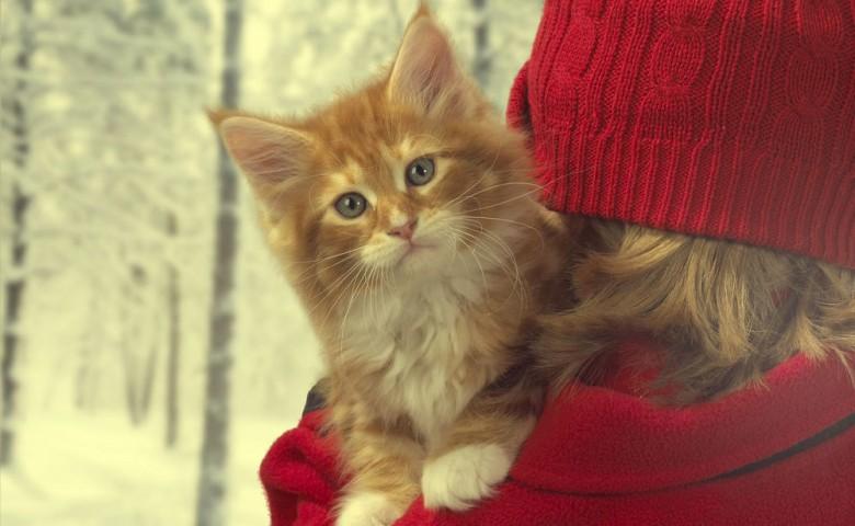 Ученые доказали, что кошки действительно снимают стресс