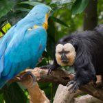 Мозг попугаев оказался похож на обезьяний
