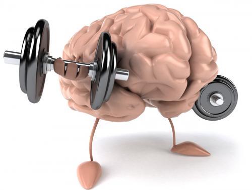 Ученые: Секрет отличной памяти — железо