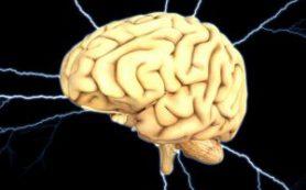 Американские ученые создали «заменитель мозга»
