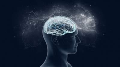 Ученые сделали удивительное открытие о мозге человека