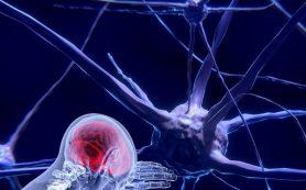 Ученые: Стресс уменьшает мозг и снижает интеллект