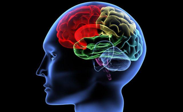 Ученые обнаружили нейрон, который стирает память