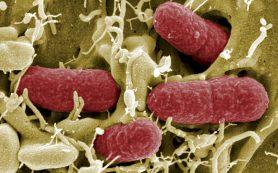 Стресс может лишить бактерий клеточной стенки