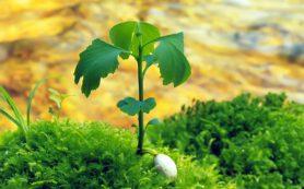 Зеленые растения спасают от депрессии