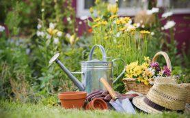 Польза садоводства для психического здоровья