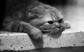 Симптомы депрессии — простым языком с примерам