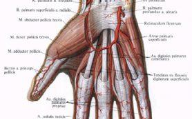 Причины онемения пальцев рук