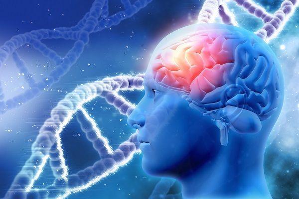 Исследователи рассказали, как спасти клетки головного мозга от гибели